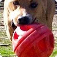 Adopt A Pet :: LINUS - Valley Village, CA