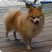 Adopt A Pet :: Wicker - conroe, TX