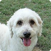 Adopt A Pet :: Miles - Walnut Creek, CA
