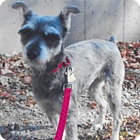 Adopt A Pet :: Baby (Adoption Pending) - Sharonville, OH