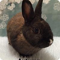 Adopt A Pet :: Autumn - Auburn, CA