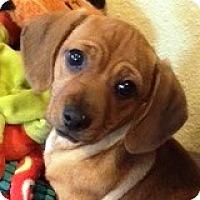 Adopt A Pet :: Finn - Houston, TX