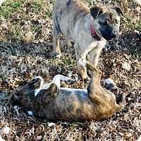 Adopt A Pet :: Paisley - Aurora, CO