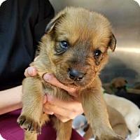 Adopt A Pet :: Kyle - Miami, FL