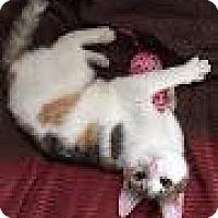 Adopt A Pet :: Chloe - Berkeley Hts, NJ