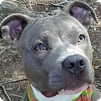 Adopt A Pet :: Marina - Framingham, MA