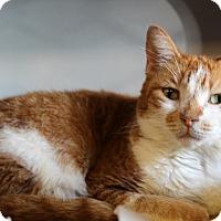 Adopt A Pet :: Missy - Sarasota, FL