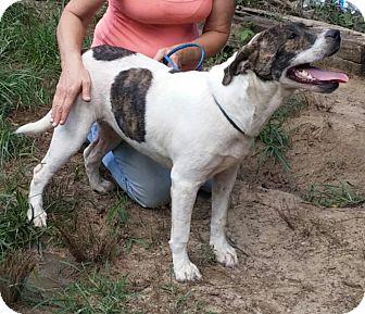 Labrador Retriever Mix Dog for adoption in Manchester, New Hampshire - Riley