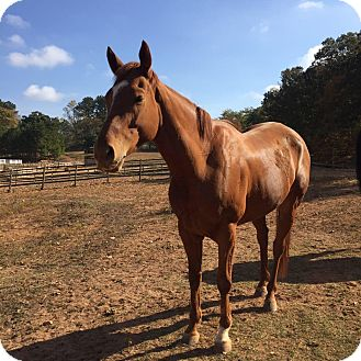 Thoroughbred Mix for adoption in cumming, Georgia - Patio Games