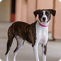 Adopt A Pet :: Dana Linn - Oceanside, CA