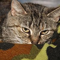 Adopt A Pet :: Oceana (Update) - Marietta, OH