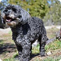 Adopt A Pet :: Rose - Mountain Center, CA