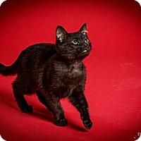 Adopt A Pet :: Pitsel - St. Louis, MO