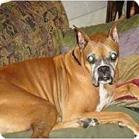 Adopt A Pet :: Dawson - Savannah, GA