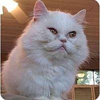 Adopt A Pet :: Adonis - Davis, CA