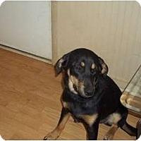 Adopt A Pet :: Moochy - Hagerstown, MD