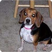 Adopt A Pet :: Peanut Bunnie - Phoenix, AZ