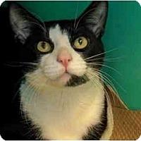 Adopt A Pet :: Gulliver - Secaucus, NJ