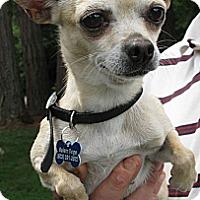 Adopt A Pet :: Sofia - Salem, OR
