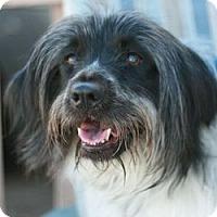 Adopt A Pet :: Lizzy - Canoga Park, CA