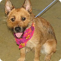 Adopt A Pet :: Kate - North Olmsted, OH