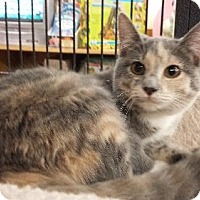 Adopt A Pet :: Amelia - Knoxville, TN