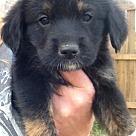 Adopt A Pet :: Reed