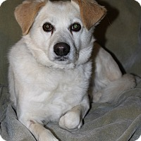 Adopt A Pet :: Baxter - Oakland, AR