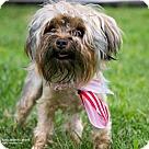 Adopt A Pet :: Wiggle Worm