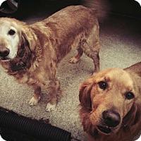 Adopt A Pet :: Murdock - BIRMINGHAM, AL