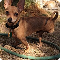 Adopt A Pet :: Robbie - Las Vegas, NV