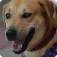 Adopt A Pet :: Thea - Scottsdale, AZ