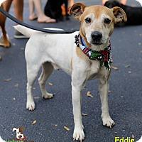 Adopt A Pet :: Eddie - Alpharetta, GA