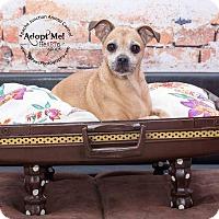 Adopt A Pet :: Ginger - Apache Junction, AZ