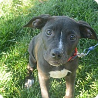 Adopt A Pet :: Sara - Meridian, ID