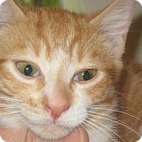 Adopt A Pet :: Nutmeg - Big Canoe, GA