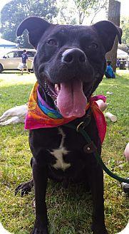 Labrador Retriever/Boxer Mix Dog for adoption in Lake Odessa, Michigan - Vader
