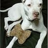Adopt A Pet :: Bianca - Freeport, NY