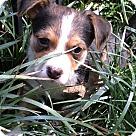 Adopt A Pet :: River (ETAA)