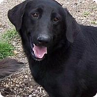 Adopt A Pet :: Sue Sue - Lafayette, LA