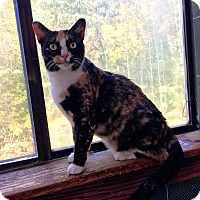 Adopt A Pet :: Scarlet - Bedford Hills, NY
