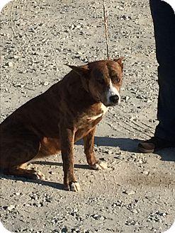 Retriever (Unknown Type) Mix Dog for adoption in Jackson, Georgia - Bitsy