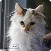 Adopt A Pet :: Skittles - Edwardsville, IL