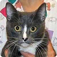 Adopt A Pet :: Lilly - Wildomar, CA