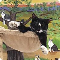 Adopt A Pet :: Dorothy - Lafayette, NJ