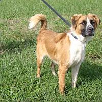 Adopt A Pet :: Jethro - Cameron, MO