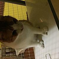 Adopt A Pet :: Kookie - Spring, TX