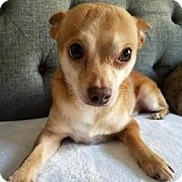 Adopt A Pet :: Colonel - Arlington, VA