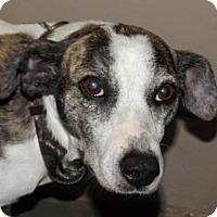 Adopt A Pet :: Monique - Oxford, MS
