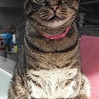 Adopt A Pet :: OLIVE - Dallas, TX